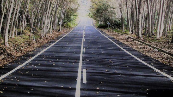 carretera entre árboles